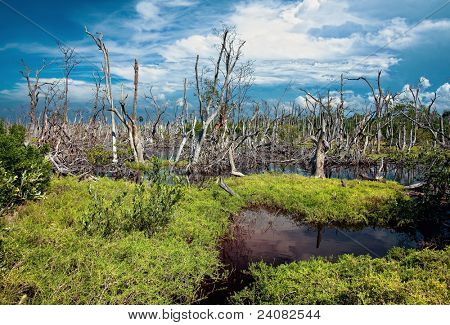 flooding forest beautiful landscape photo