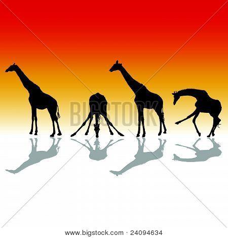 Giraffe Four Vector Silhouette