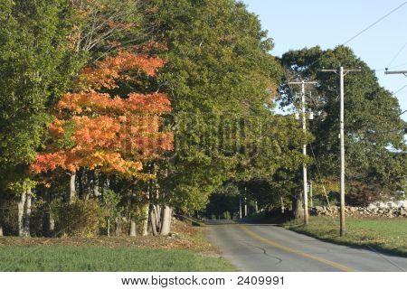 Camino rural