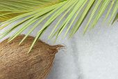 Tropical Nature Background Ripe Coconut Spiky Green Yellowish Palm Leaf Scorched By The Sun. Healthy poster