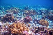 Coral Reef Landscape On Sea Bottom. Warm Blue Sea View With Clean Water And Sunlight. Marine Life Wi poster