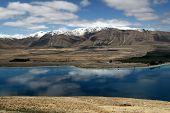 pic of mckenzie  - Lake Tekapo  - JPG