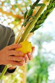 stock photo of sukkot  - A man - JPG