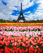 Eiffel Tower With Fresh Spring Flowers, Paris, France poster
