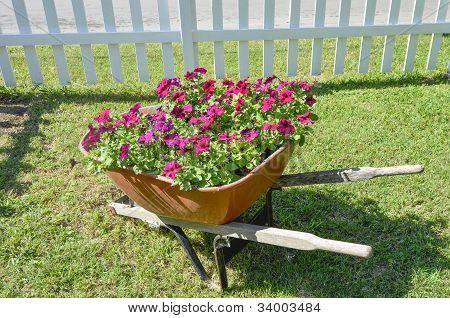 Flowers in a wheel barrow