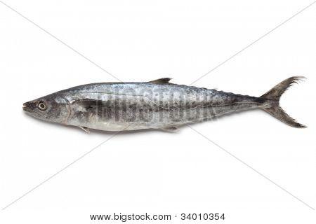 Whole single King fish on white background