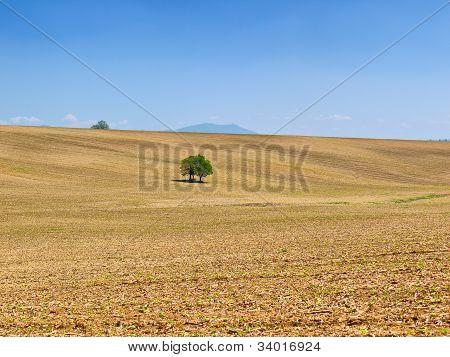 Campo hermoso y un cielo azul