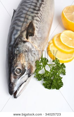 raw mackerel with  parsley and lemon on white