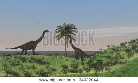 brachiosaurus grazing