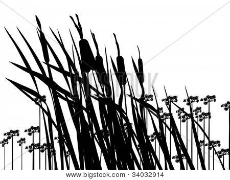 illustration with rush and flower silhouettes isolated on white background