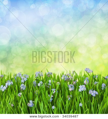 Myosotis Blue Flowers into Green Grass with Waterdrops on Defocused Background