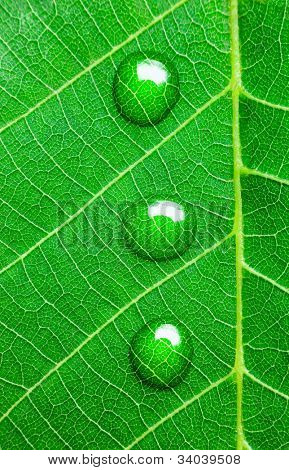 Water Drops on a Green Leaf  /  Ecology concept / Super Macro