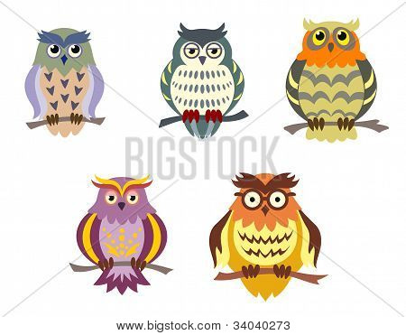 Color Cartoon Owls
