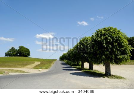 Road And Nature