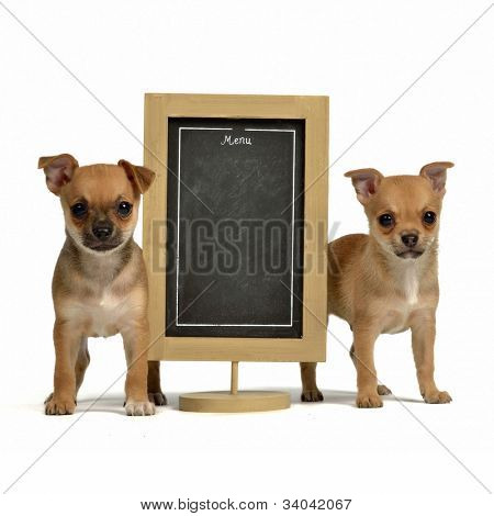 Two puppies with menu blackboard, isolated on white background