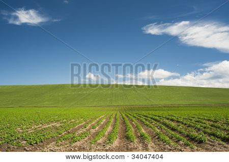 Fields In The End Of Spring