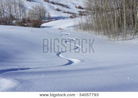Back Country Ski Tracks