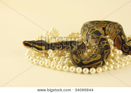 Pearls are a snakes best friend