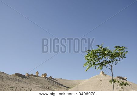 desert and the trees