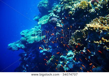 Coral reef and fish underwater for diving.