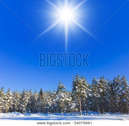 Árboles de invierno en las montañas
