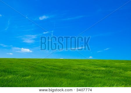 Green Field Under Bright Blue Sky