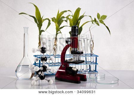 Laboratory glassware containing plants in laboratory