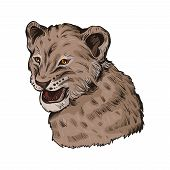 Lion Animal Baby Tabby Portrait In Closeup Isolated On White. Deep-chested Cat With Mane Looking Asi poster