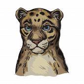 Sunda Clouded Leopard Baby Tabby Vector Portrait Closeup. Neofelis Diardi Animal From Feline Mammals poster