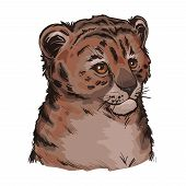 Tigon Baby Tabby Animal Vector Portrait In Closeup Isolated Sketch. Animalistic Drawing Of Tigon Hyb poster