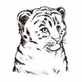 Tigon Baby Tabby Animal Vector Portrait Isolated Sketch T-shirt Print, Monochrome. Animalistic Drawi poster