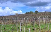 image of tokay wine  - Vineyard in the Tokaj hills in North Hungary - JPG