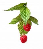 image of green leaves  - raspberry with green leaves isolated on white background - JPG