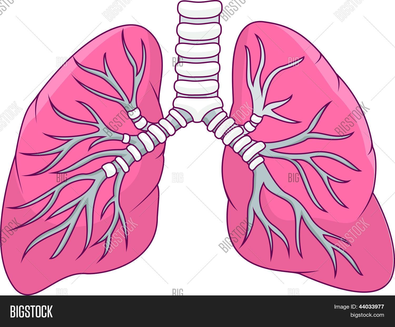 Vector y foto Dibujos Animados De Pulmón Humano | Bigstock