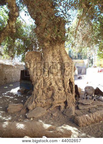 Nubian Village, Elephant Island, Egypt -