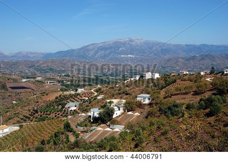 Andalusian countryside, Iznate, Spain.