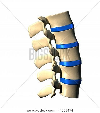 Lumbar Spine - Lateral view / Side view