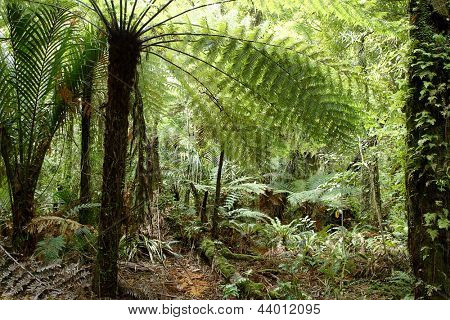 Fern tree in tropical jungle forest