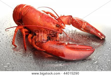 Red lobster on grey background