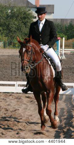 Equestrian Sportsman Riding Brown Horse