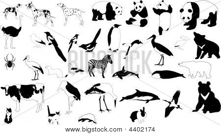 Black And White Animals