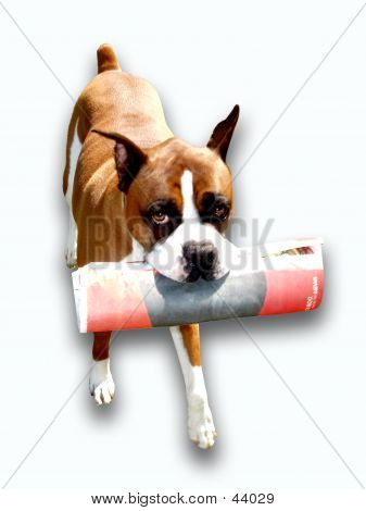 DOG WITH PAPER