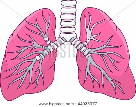 Human lung cartoon