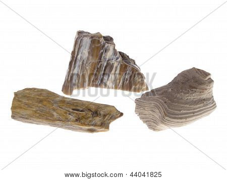 Petrified Wood, Poland