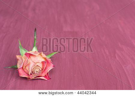 Dry Rose Background