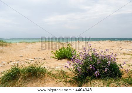 Landscape from coast island Oleron with wild flowers