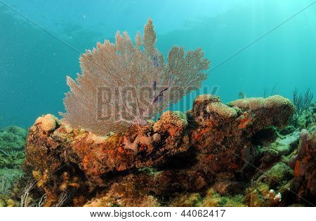 Underwater Seascape With Focus On Sea Fan