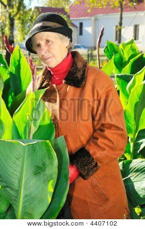 Anciana entre hojas