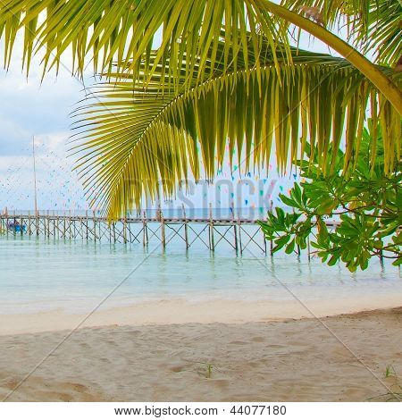 Palm tree leaves, beach and old pier