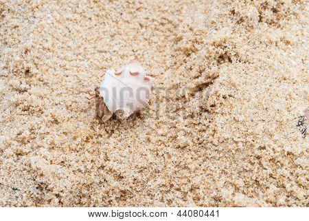 Hermit Crab On The Beach
